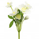 Christ rose bush x8, length 25cm, white, 6 petals